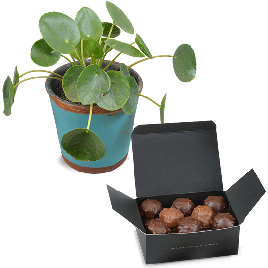 Pilea and Chocolate Rochers
