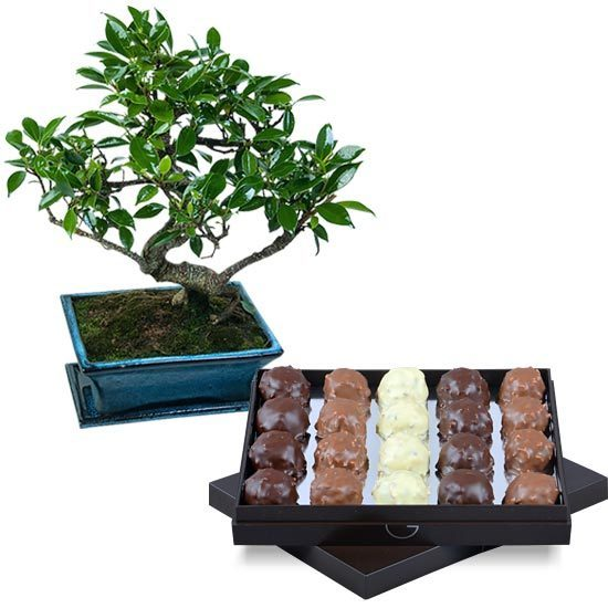 Send a box of chocolate rochers and bonsai