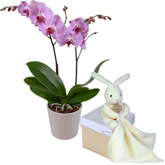 Phalaenopsis orchid and cuddly rabbit