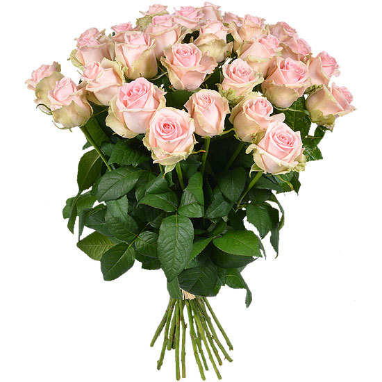 Bouquet of pastel pink long-stemmed roses