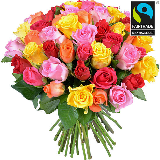 Harlequin - Fairtrade roses