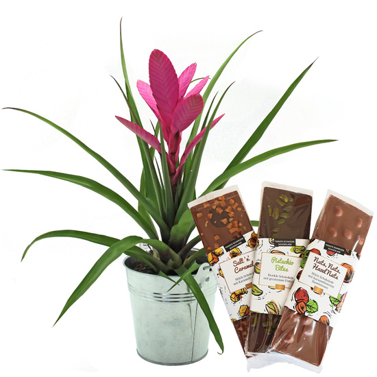 Pink Bromeliad with 'Crunchy Chocolate'
