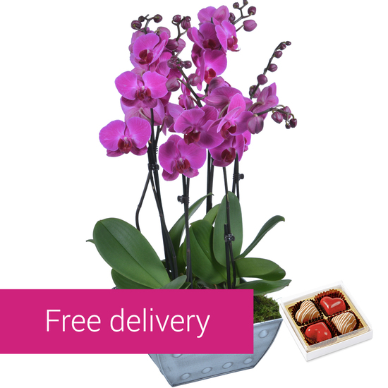 Composition of orchids with chocolates
