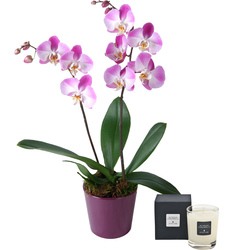 'Butterfly' orchid with a scented candle