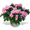 Same day delivery available with the Azalea
