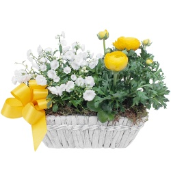 Same day delivery available with the Indiana Arrangement