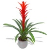 Same day delivery available with the Guzmania