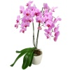 Same day delivery available with the Purple Orchid