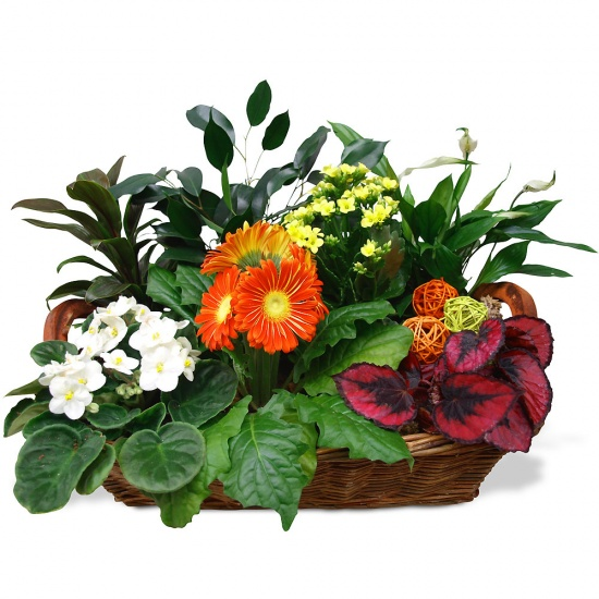 Same day delivery available with the Amazonia Arrangement