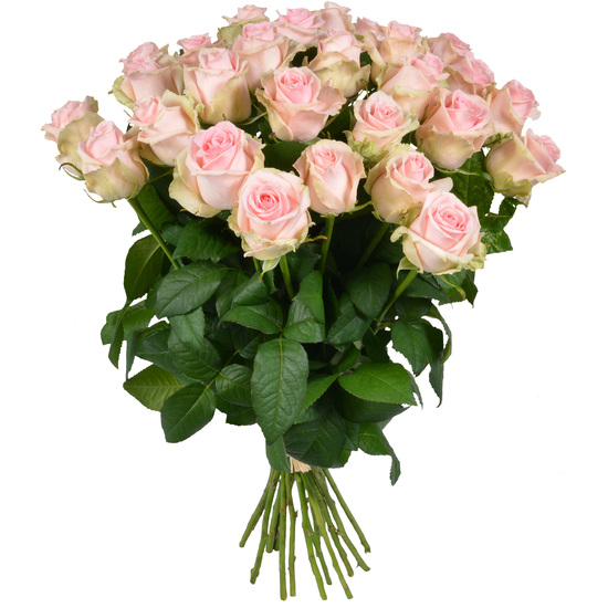 Same day delivery available with the Pink Roses Bouquet