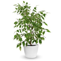 Same day delivery available with the Roberficus