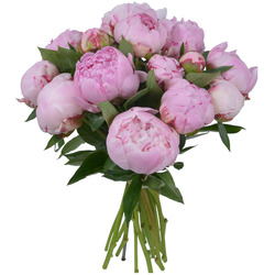 Same day delivery available with the Pink Peonies Bouquet