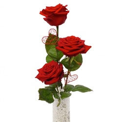 Same day delivery available with the Trio of Roses Bouquet